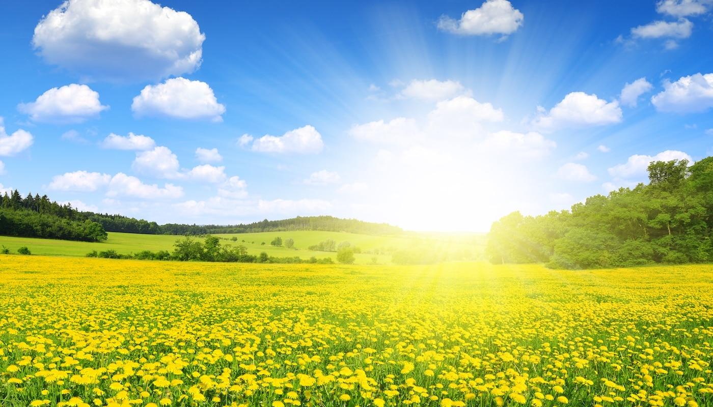 A Vision of Greener Pastures